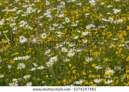 A wildflower meadow in in the Summer time #1074297485