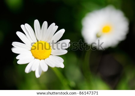 A wildflower with white petals against the green forest floor.