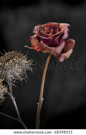 A wilting rose and thistle signifies lost love, divorce, duality