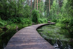 A winding bridge over a forest river. Wooden boardwalk in the green forest. Beautiful hiking trail or footpath across the river.