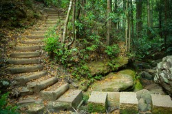 A winding path through the forest. Stepping stones across river and steps uphill in Blue Mountains, New South Wales, Australia.