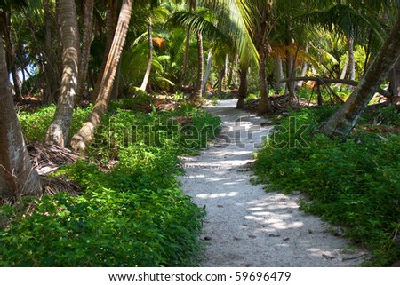 A winding sandy path on Lighthouse Caye, Belize.  As close to a deserted island as can be.