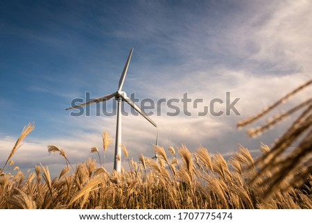 A windmill in a reed field and blue sky. ストックフォト ©