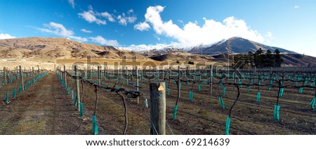 A winery and bare vines at a Central Otago winery on New Zealand\'s South Island. This area is reknowned for it\'s splendid Pinot Noir varieties