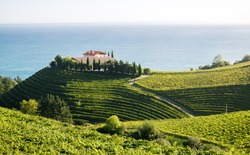 A winery in Eitzaga, Basque Country, just next to Getaria. Fields of grapevines can be seen in the foreground.
