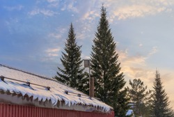 A winter evening village scene with a barn with icicles hanging from the roof, a viper and tall firs. Beautiful sunset yellow-blue sky. Triangular spruce solo. Waiting for spring, Ural (Russia)