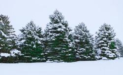 A winter landscape in Minnesota