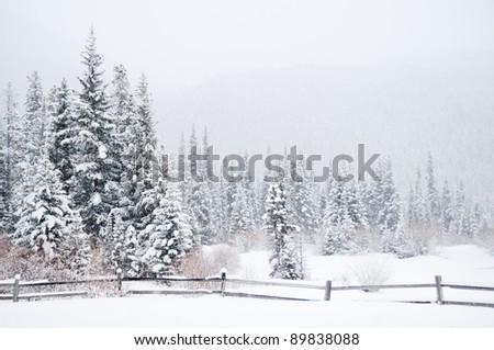 A winter landscape in the Colorado wilderness