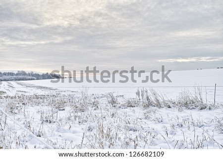 A winter landscape photo - trees, sky and snow