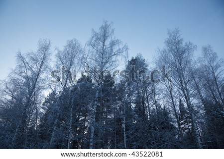 A winter nature shot with beautiful frosty trees. Very cold weather.