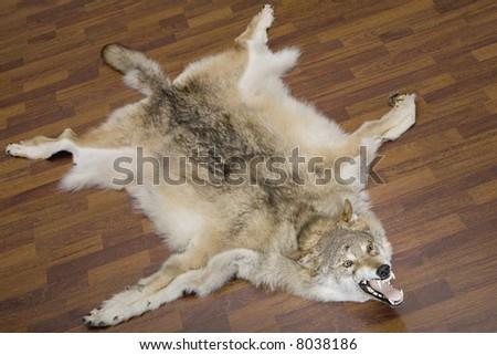 [Image: stock-photo-a-wolf-pelt-on-the-floor-8038186.jpg]
