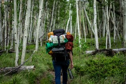 A woman backpacker hikes through an Aspen forest in Colorado.