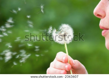 A woman blowing on a dandelion in the summer time