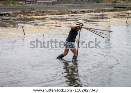 A woman carries long bamboo poles on her right shoulder and back as she walks in the wetlands wearing a straw hat, shorts and high boots. Water surround her legs. The shore is in the background. #1102429343