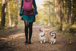 a woman carrying a baby in a baby carrer and walking with two welsh corgi pembroke dogs