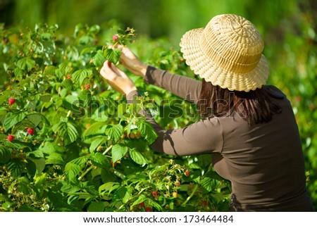 a woman enjoying raspberries straight from a raspberry bush