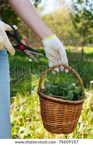 A woman gathers fresh nettles in a field - stock photo