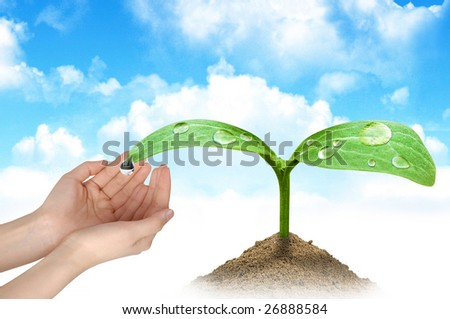 A woman hands and a green plant