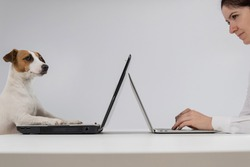 A woman is working on a modern laptop, while a Jack Russell Terrier dog on an obsolete on a white background. Comparison of fast and slow typing on the keyboard
