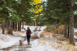 A woman jogging and walking the dog in the forest trail in a snowy autumn sunny day.