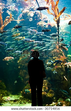 A woman looking into a large aquarium tank