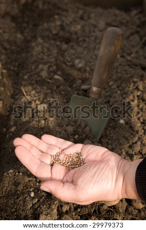 A woman's hand, full of seeds, with earth and a trowel in the background