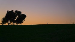 A woman (silhouette) walking on a field towards tall and lonely tree at sunset against a background of golden horizon, Ramot Menashe, Israel