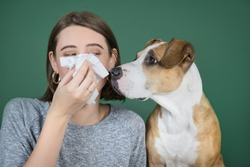 A woman sneezes and blows her nose into a napkin and looks at her dog. Coronavirus, COVID-19 pandemic concept. Concept of allergies to domestic animals.