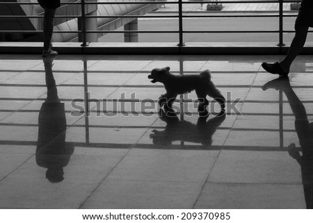 a woman stand along and a dog walking on marble flooring with shadow reflection