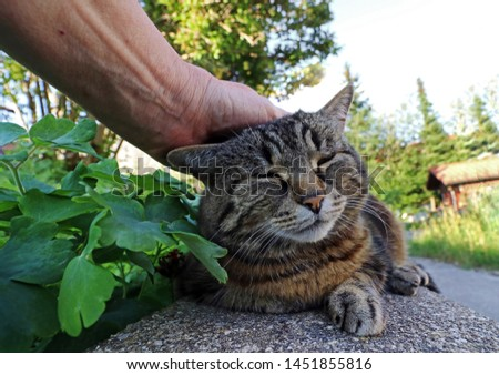 A woman strokes her cat over the head. Cats love to be stroked