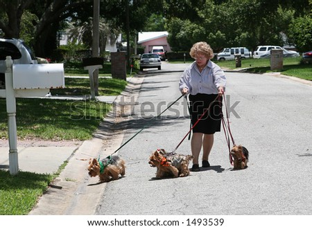 A woman struggling to walk four yorkshire terriers down the street.