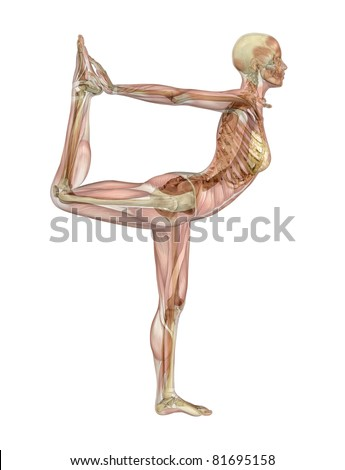 A woman takes a yoga dancer pose - semi-transparent muscle over skeleton - 3d render. - stock photo