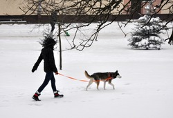 A woman walking her dog in winter in the snow