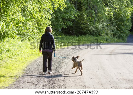 A woman walking the dog in the summer time on a lonely road. The dog is Italian waterdog also known as lagotto romagnolo.