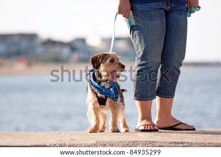 A woman walks a cute borkie beagle yorkie mix puppy at the beach.