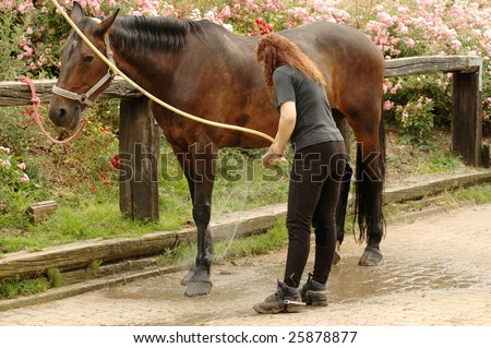 A woman washes the feet of horse.