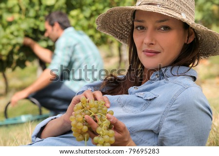 a woman wearing a straw hat is eating grapes behind a man harvesting grapes