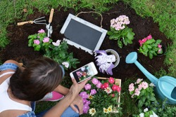 A woman, while using the phone, makes gardening with colored flowers to give color and decorate her garden, in background a small blackboard. Concept of: gardening, app