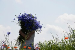 A woman with a large bouquet of cornflowers against the blue sky. A woman in nature with a bouquet of wild flowers. in the meadow. An elderly woman in a field with daisies, poppies and blue cornflower