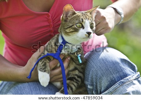 A Women is getting a cat into a leash - stock photo
