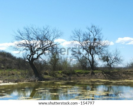 A wonderful picture of a pond down in texas