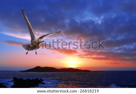 a wonderful sunset with a gull flyng
