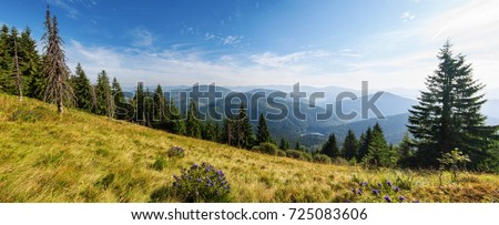 A wonderful view in the Carpathian Mountains. Sinevir - Shutterstock ID 725083606