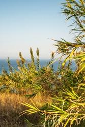 A wonderful village on the coast of Corfu