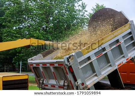 A wood chipper at work machinery, wood shredder placed in the intake chute for chipping after an unexpected hurricane storm ストックフォト ©