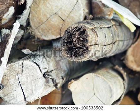 a wood cut is a log