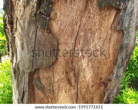 A wood pattern photographed from an almost dying tree in the garden