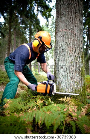 a woodcutter at work in the forest