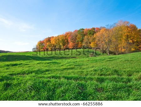 A wooded area with colorful autumn trees and a green field and blue sky. - stock photo