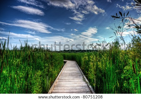 A wooden boardwalk cuts the the tall reeds, grass and cat-tails of an overgrown marsh.